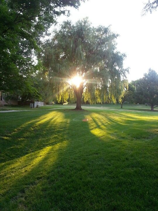 Weekly Photo Challenge: Golden Hour   Colorado Shines Take 2