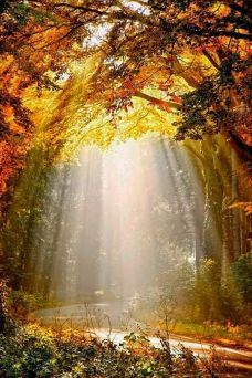 The Sunlight Photograph by Lars van de Goor