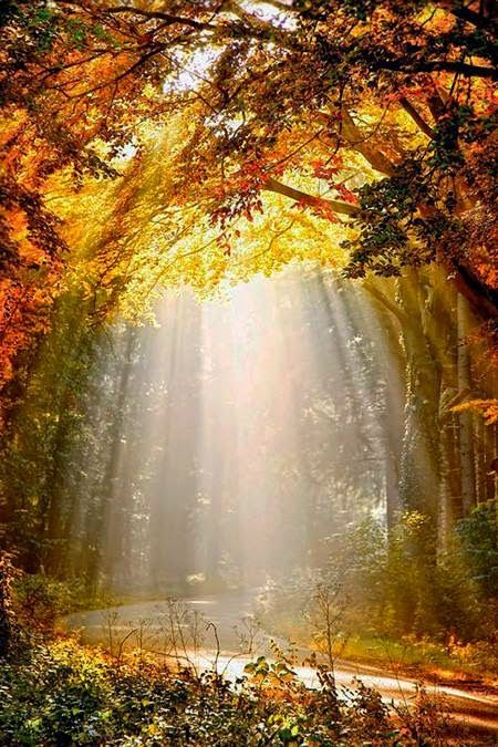 The Sunlight Photograph by Lars van de Goor Retrieved via https://plus.google.com/101642458686621917172/posts/i57UsoT5wBL?cfem=1